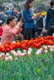 People Watching Tulips In Hangzhou Stock Photography