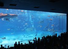 People watching whale shark and manta rays in Aquarium Royalty Free Stock Photos