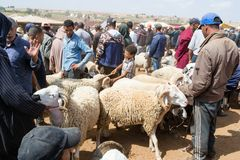Sheep open-air market in Morocco royalty free stock photography