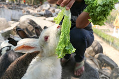 People were feeding rabbits Stock Photo