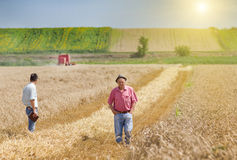 People on wheat field Stock Photos