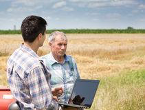 People on wheat field Royalty Free Stock Photography