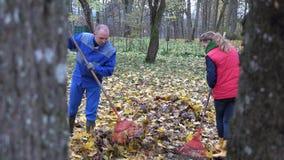 People woman man rake dry autumnal leaves in park. 4K stock video footage
