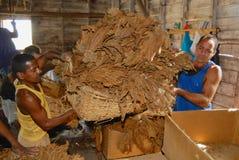 People work at a cigar factory in Panir del Rio, Cuba. . Pinar del Rio, Cuba - October 23, 2006: Unidentified people work at a cigar factory in Panir del Rio royalty free stock photos