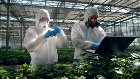 People work with plants in a greenhouse, testing them with liquid in a tube. 4K stock footage