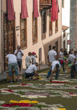 People working in the carpet of flowers Stock Photography
