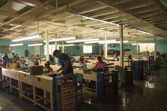People working in a cigar factory Royalty Free Stock Photos