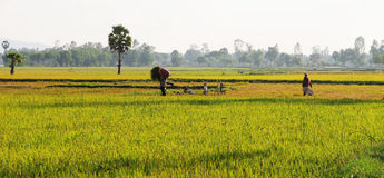 People working on the field in Bacgiang, northern Vietnam Royalty Free Stock Photo