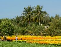 People working on the flower field in Ben Tre, Vietnam Stock Photo