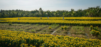 People working at the flower fields Stock Photo