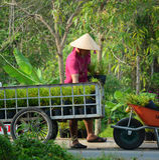 People working at the flower garden in Ben Tre, Vietnam Royalty Free Stock Photo
