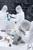 People working in a laboratory Royalty Free Stock Photo