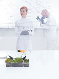 People working in laboratory Royalty Free Stock Photos