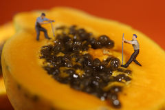 People Working on Papaya Fruit Royalty Free Stock Photo
