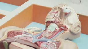 People working with pieces of plastic human anatomy model placed in box. People are working with organ pieces of educational plastic colored human body anatomy stock video footage