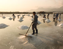 People working on the salt field Royalty Free Stock Photography