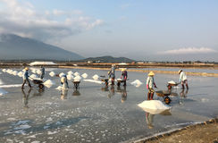 People working on the salt field Stock Image