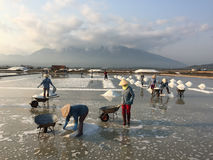 People working on the salt field Stock Photos