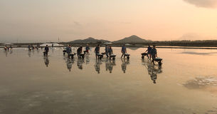 People working on the salt field Royalty Free Stock Photo