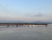 People working on the salt field Stock Photography