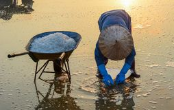 People working on salt field at summer royalty free stock photography