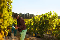 People working in vineyard Stock Photos