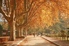 People& x27 Zhengzhou; парк s Стоковые Фото