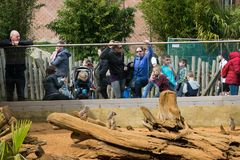 People At zoo royalty free stock photo