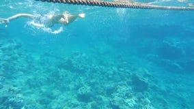 Peoples snorkeling stock footage