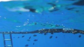 Peoples snorkeling Stock Photo