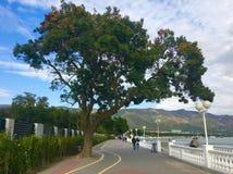 Peopple di giorno del cielo del mare dell'albero Fotografie Stock Libere da Diritti