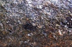 Pepagan inoltre è chiamato corteccia, che è lo strato esterno dei gambi immagini stock