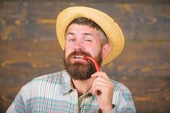 Pepe barbuto della tenuta dell'agricoltore a disposizione Concetto del raccolto del pepe L'agricoltore rustico in cappello di pag immagine stock