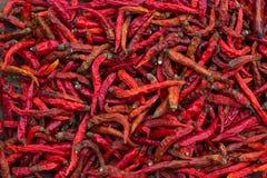 Pepe di peperoncini rossi rovente secco dei peperoncini rossi Immagine Stock