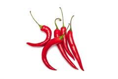 Pepe di peperoncino rosso Fotografia Stock