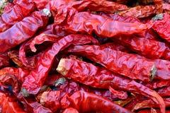 Pepe di peperoncino rosso asciutto Fotografia Stock Libera da Diritti