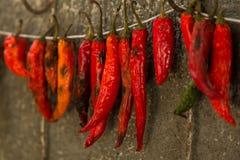 Pepe di peperoncino rosso caldo Immagini Stock Libere da Diritti