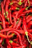 Pepe di peperoncino rosso caldo Fotografia Stock Libera da Diritti