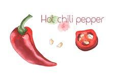 Pepe di peperoncino rosso caldo illustrazione vettoriale