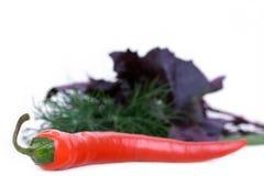 Pepe di peperoncino rosso con aneto e basilico Fotografie Stock