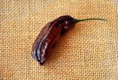 Pepe di peperoncino rosso del Habanero Fotografia Stock Libera da Diritti