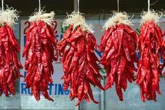 Pepe di peperoncino rosso Ristra Immagini Stock Libere da Diritti