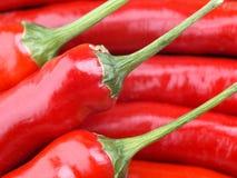 Pepe di peperoncino rosso rosso Fotografie Stock Libere da Diritti