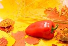 pepe in fogli Fotografia Stock Libera da Diritti