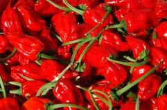 Pepe rossi dei peperoncini rossi Fotografia Stock Libera da Diritti