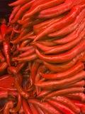 Pepe rosso Immagine Stock