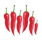 Pepe rosso di hili del  di Ñ - illustrazione Fotografie Stock