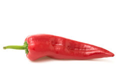 Pepe rosso su bianco Fotografia Stock