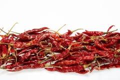 Pepe secco rosso dei peperoncini rossi Fotografia Stock