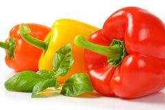 Peper, Groen Rood, Geel, Oranje, Royalty-vrije Stock Afbeelding